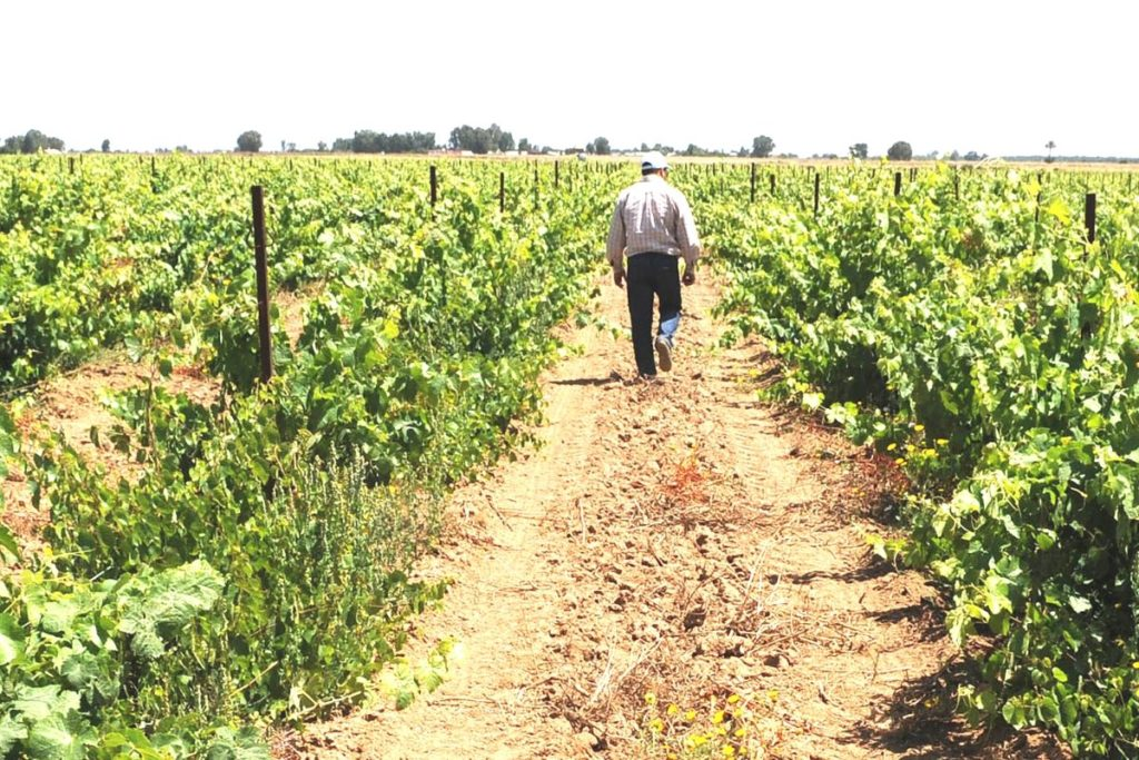 Highlights of Agriculture in North Africa