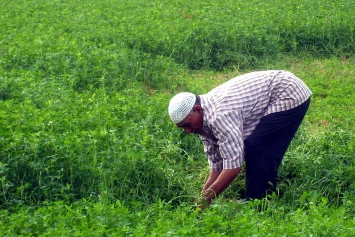 Egypt partners The UN's FAO to Digitize Agriculture