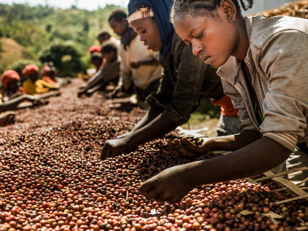 Coffee Producers in Africa