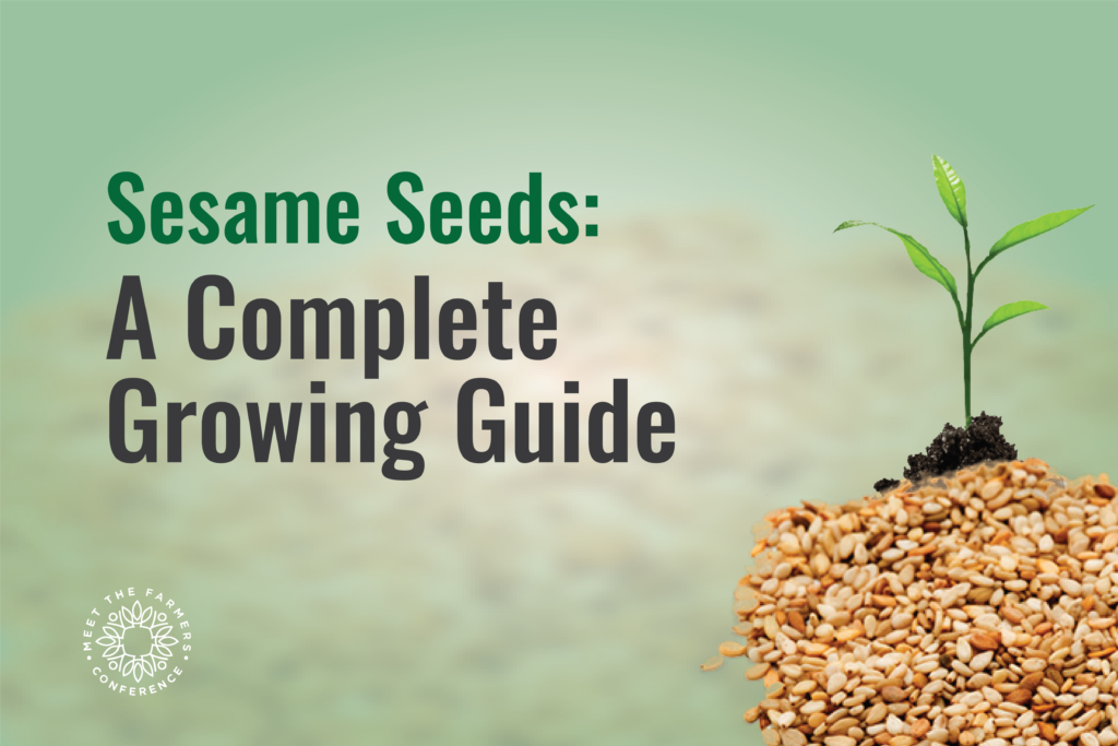 Sesame Seeds: A Complete Growing Guide